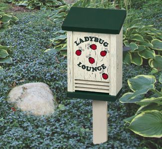 Ladybug House Woodcraft Pattern Project