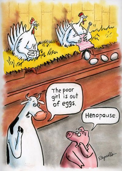 Raising Chickens : Keeping Chickens in your Backyard: Henopause cartoon by Dan Reynolds