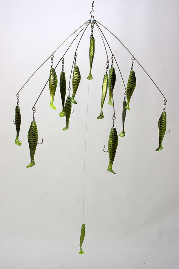 11 best 32 shad umbrella rigs images on pinterest rigs for Tiger striped fish