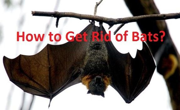 Pin By Ericka Fry On Around The House In 2020 Getting Rid Of Bats Bat How To Get Rid