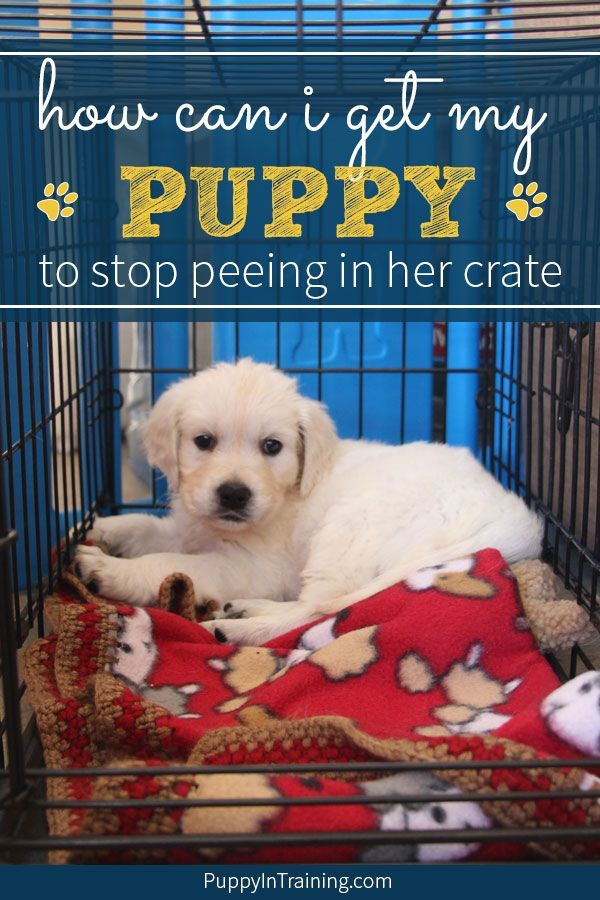 How Can I Get My Dog To Stop Peeing In Her Crate Pet Behavior
