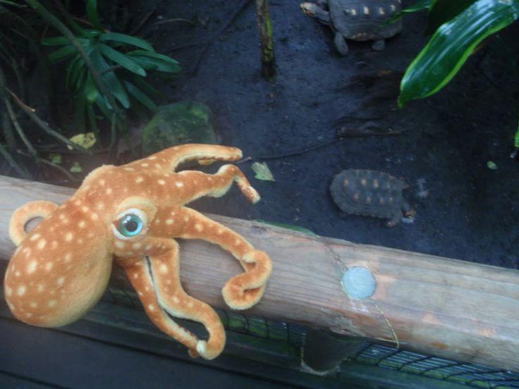 Freshwater octopus species species of freshwater for Freshwater fish representative species