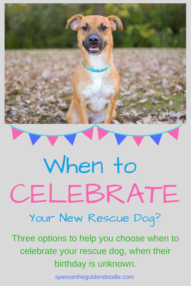 Spencer the Goldendoodle shares three options to help you choose when to celebrate your rescue dog, when their birthday is unknown. Simply click the picture to learn more.