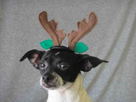 Reindeer ears for dog or cat for christmas by lenapavia on Etsy, $9.99
