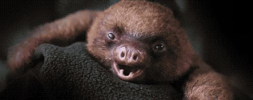 """10. """"My mom can only have one of me a year."""" 
