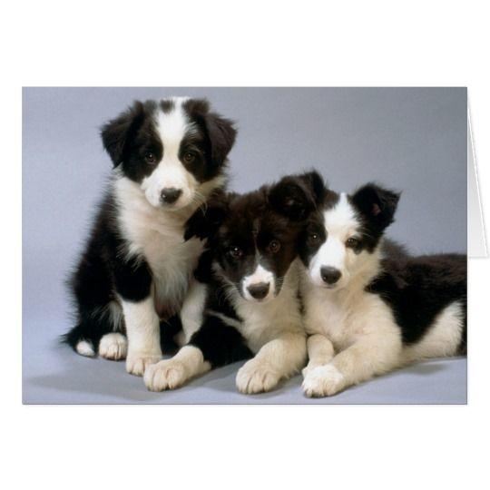 Border Collie Puppy Dog Blank Note Card
