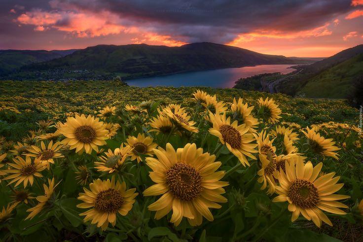 Słoneczniki, Jezioro, Góry, Zachód, Słońca