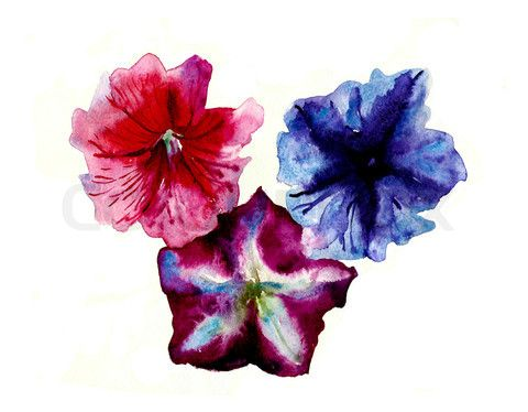 Watercolor three multi color petunias flower head stock photo