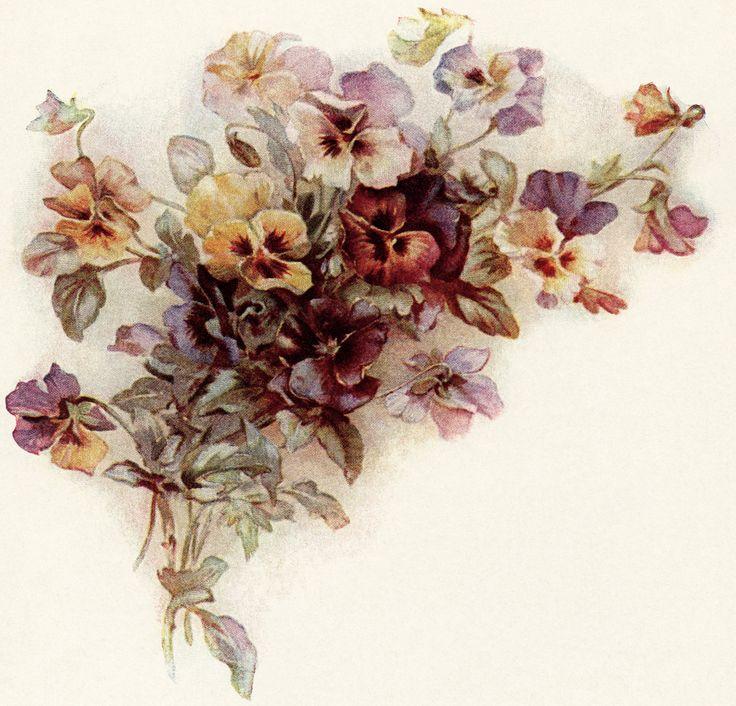 сытный красивые картинки с цветами старинные лейпциге семье немки