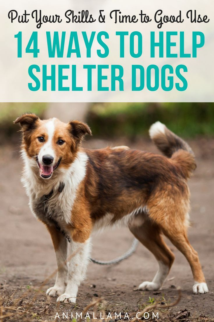 14 Ways To Help Shelter Dogs Other Than Donating Money Animallama Shelter Dogs Dogs Animal Shelter