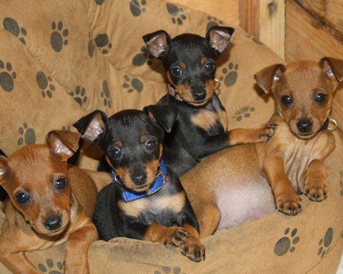 Millie's puppies. So cute.......