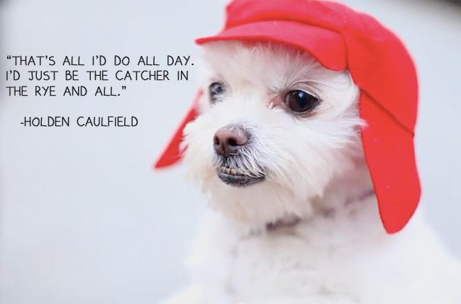 Book-Loving Pup Does Impression Of Holden Caulfield And It's ...