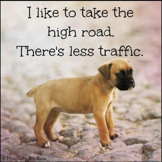 Pinterest Animal Quotes: 252 Best Animals - Quotes Images On Pinterest