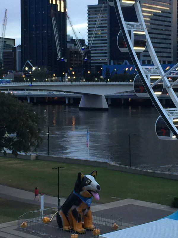 Bazza the RSPCA Mascot is gearing up for a big Sunday at South Bank! #visitsouthbank #rspcampw #millionpawswalk