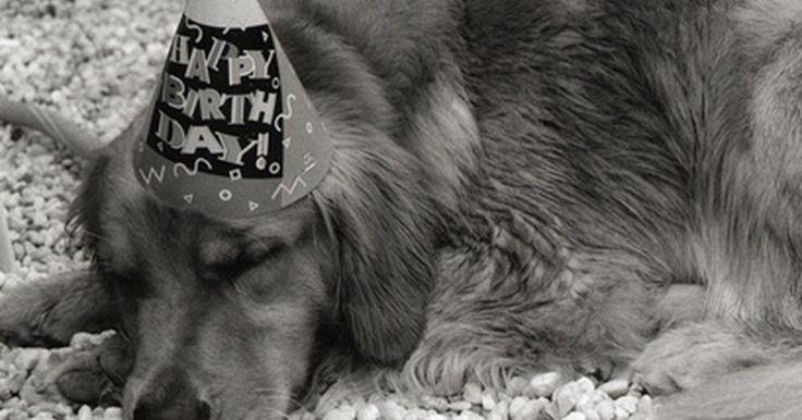 Como fazer pirulitos com formato de osso de cachorro. Lembrancinhas de festas são uma maneira divertida e criativa de tornar qualquer evento memorável. Sacolinhas de surpresas podem conter vários tipos de itens, desde cartões de presente até doces. Ocasiões especiais podem até mesmo pedir lembrancinhas específicas. Se você ama cachorros, por exemplo, e for realizar uma festa de aniversário para um ...