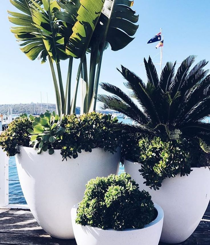 Inspo for around the decking, love it!.. #pots #plants #backyard #cycad #giantbird #succulents #white #decking Pic @Hamptons_at_home_sydney