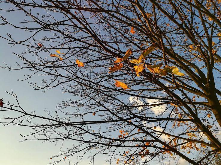 "32 To se mi líbí, 1 komentářů – Martin Kříž (@mmkriz) na Instagramu: ""Autumn . . . . #autumn #autumn🍁 #autumntree #autumntime #sky #fallentree #fallen #tree #leaves…"""