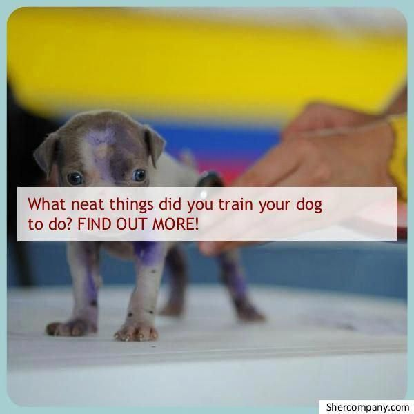 Discover More About Dog Training How To Your Pet Dog Will Need A