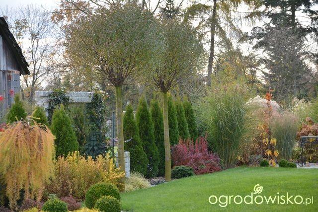 Mój skromny ogród - strona 421 - Forum ogrodnicze - Ogrodowisko