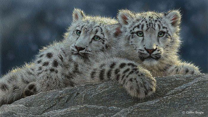 big cat cubs pics | Big Cat Paintings, Wild Cat Art Prints, Tiger, Lion, Snow Leopard ...