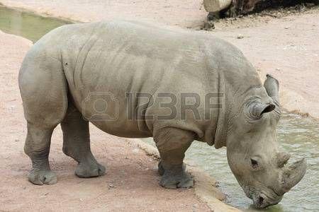 rhino: rhino in the jungle