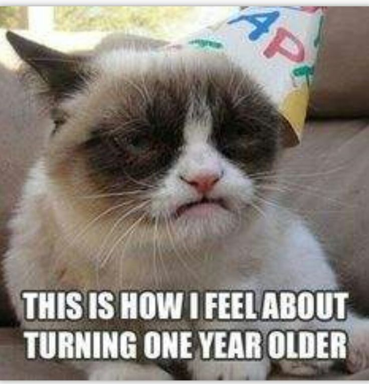 40th Birthday Happy Meme Grumpy Cat Gifts Memes Hilarious Birthdays Funny Sayings Facebook