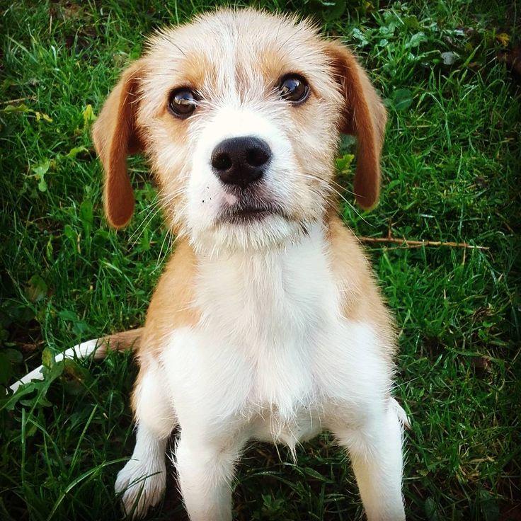Arturo🐶💖#dog#puppy#musetto#simpatico#instagood#instalike#instatime#instadaily#animal#love#perrito#nature#pic#picoftheday#tag#tagforlikes#tagforfollow#cute#petstagram