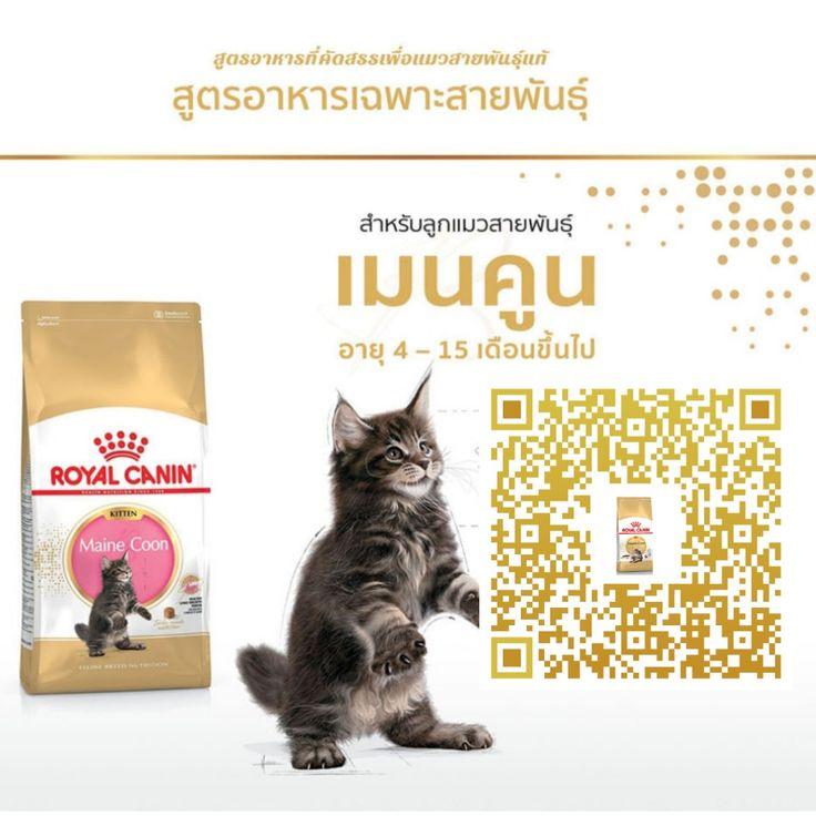 Royalcanin อาหารแมว ทาสแมว Moomall Onlineshopping แมว