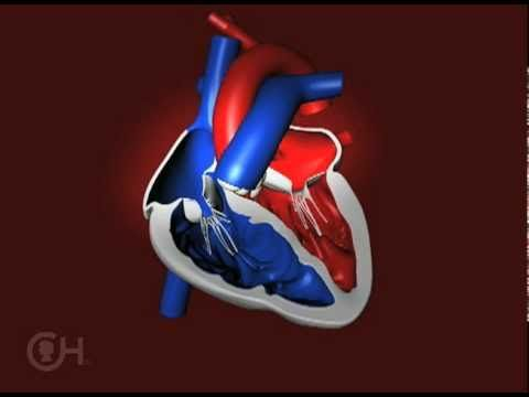How a Normal Heart Pumps Blood -- The Children's Hospital of Philadelphia - YouTube