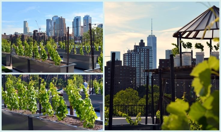 Rooftop Red in the Brooklyn Navy Yard
