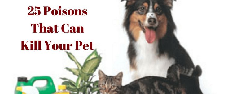 25 Poisons That Can Kill Your Pet | Pet Quest