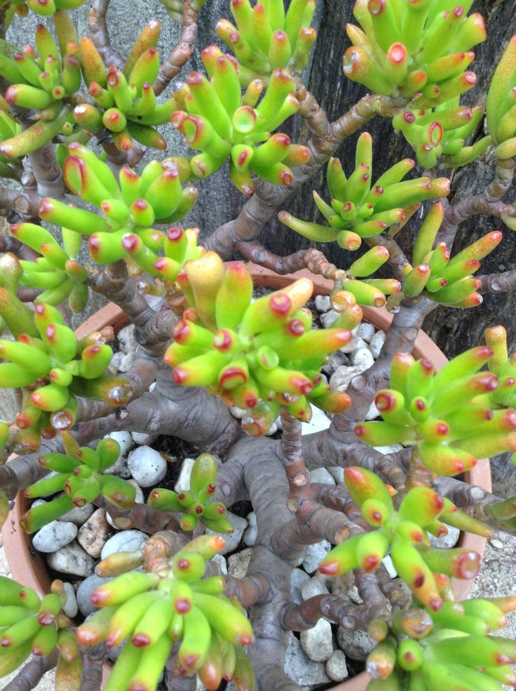 a9f6b01a83a20d3b01625b789f91e5ed--crula-ovata-succulents Caring House Plants on peaceful plants, detailed plants, balanced plants, learning plants, awesome plants, sharing plants, strong plants, tall slim plants, loving plants, protecting plants, respecting plants, tough plants, creative plants, resilient plants, talking plants, meaningful plants, england plants, positive energy plants, most important plants, friendly plants,