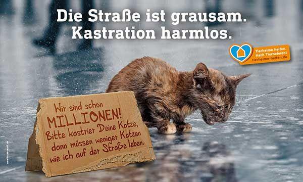 Katzenschutz-Kampagne : Wir sind Millionen! Bitte kastrier deine Katze, dann müssen weniger Katzen wie ich auf der Straße leben.