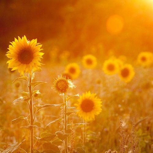 Sunshine flower <3