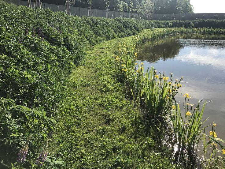 Pond banks reinforced with geoSYSTEM S60s and planted with grass meadow. AFTER