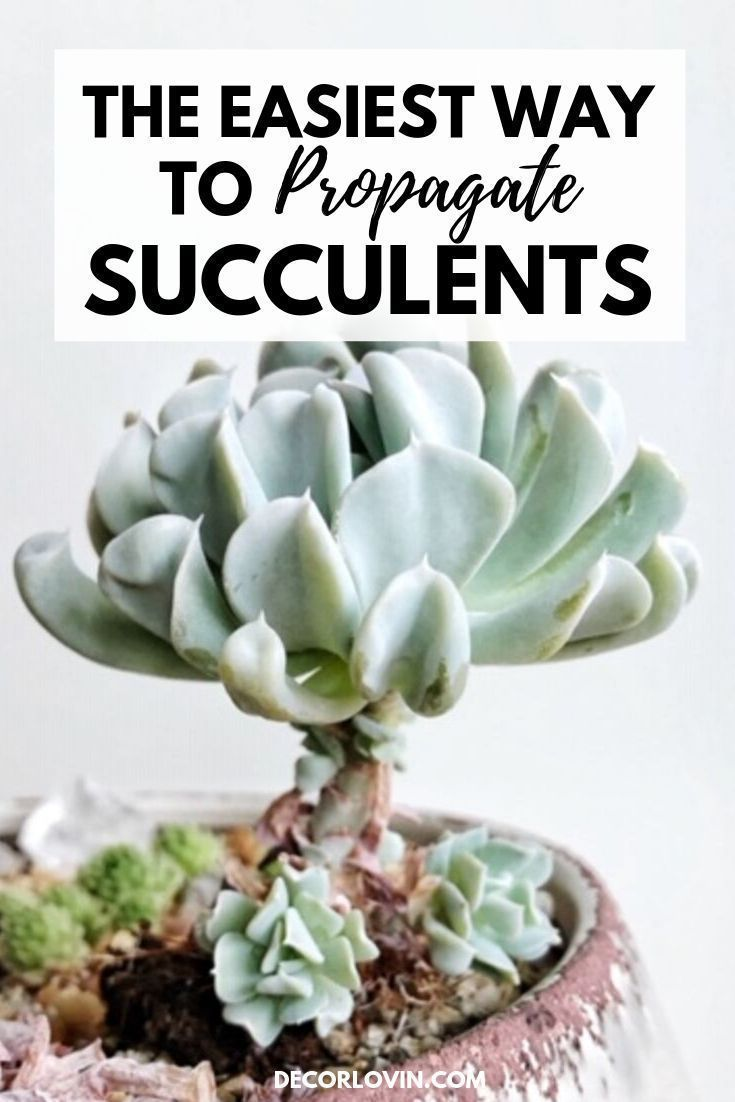 How To Propagate Succulents The Easy Way In 2020 Propagating