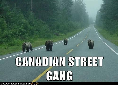 Actually, a Canadian Street gang would be comprised of raccoons and squirrels. Criminal bastards the lot of them.: The Doors, Funny Pics, Canada, Thug Life, Funny Animal Pictures, Funny Pictures, Bears Hugs, Canadian Street, Street Gang