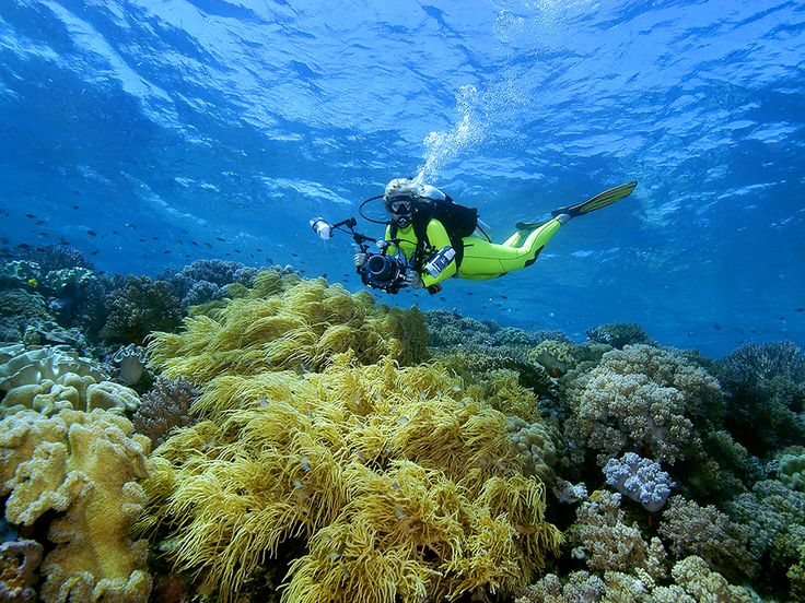 Diving in Wakatobi