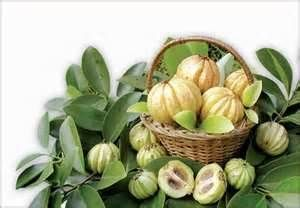 3 Ways to Make Sure You Buy Safe Garcinia Cambogia Extract - http://www.garcinia-cambogia-review.com/safe-garcinia-cambogia-guide/