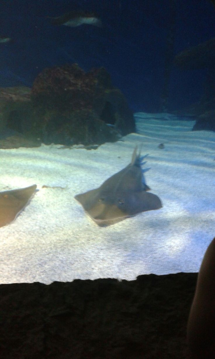 Aquarium of Cattolica