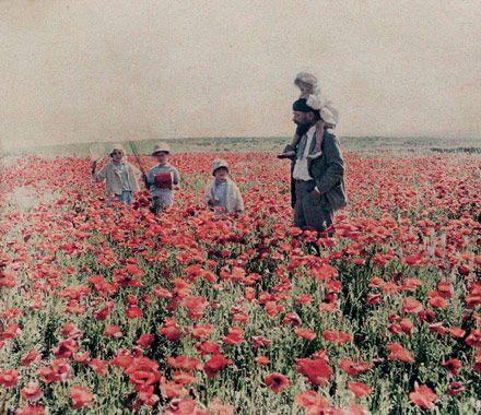Coquelicots à Dar Bou Azza (Maroc) 1935, Gabriel Veyre, Filmcolor stéréoscopique 5,4x6,4 cm