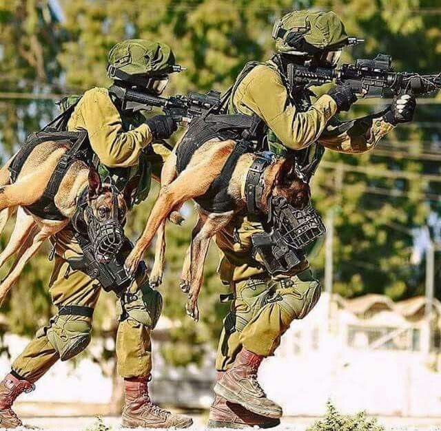 via Pete Somers... You're not really bad-ass until you carry a holstered attack dog.