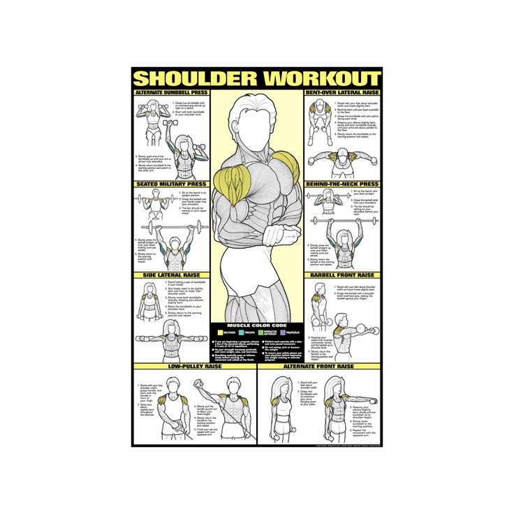Shoulder Workout Poster - Laminated