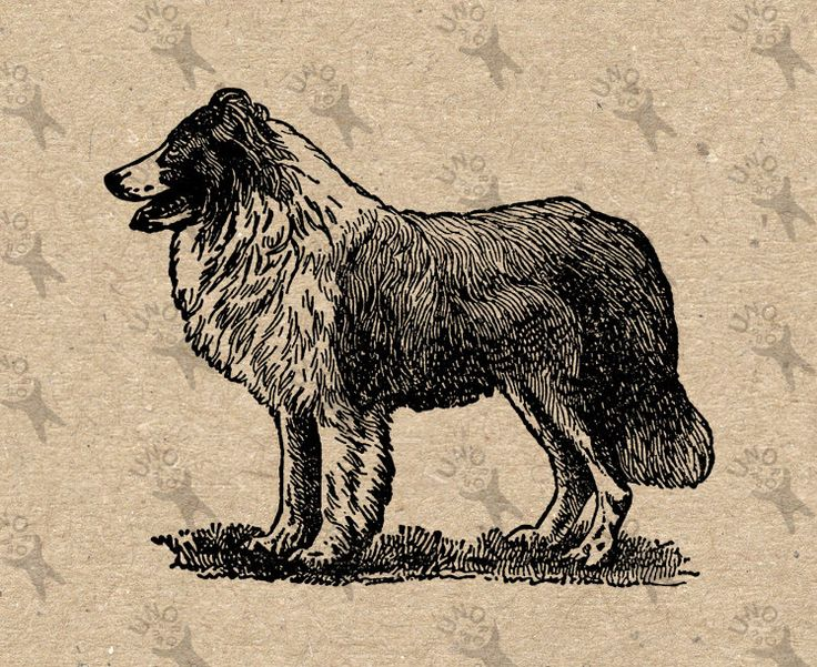 Vintage image Dog Collie Instant Download Digital printable clipart graphic Burlap Fabric Transfer Iron On  Decor T-shirt  HQ  300dpi by UnoPrint on Etsy
