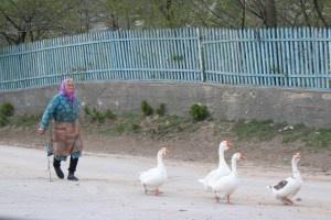 Moldova geese parade Jamie Sands