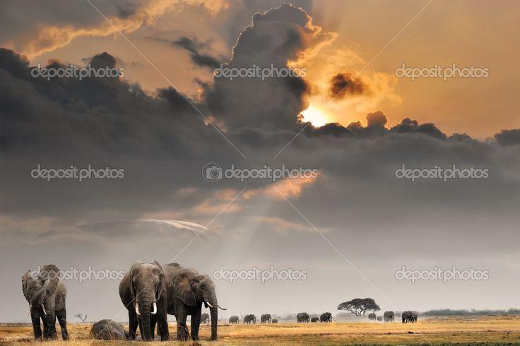 Африканский закат с слонов — стоковое изображение #5450014