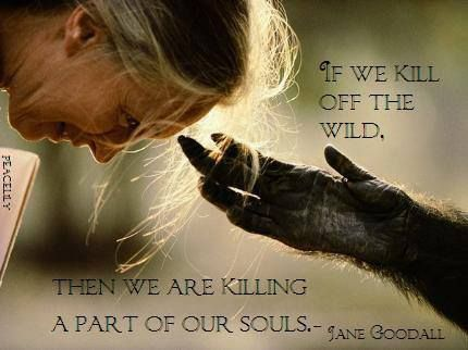 """If we kill off the wild, then we are killing a part of our souls."" Jane Goodall"
