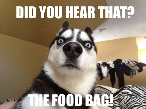 Definitely what mine look like when they hear the treat bag! lol