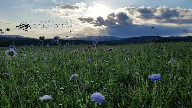 #Colours #speak #all #languages @TatianaSujet ♥ www.colour.sk #colourful #jun2016 #slovakia #europe #world #universe #international #peace #love #happiness #peaceful #becreative #beautiful #flowers #green #grass #blue #sky #sun #clouds #nature #art #design #inspiring #colour