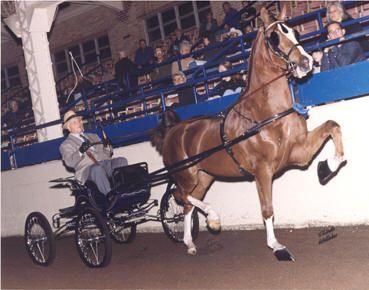 Hackney Horse | Hackney Horses